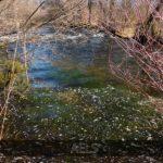 espumas río Segundera_1