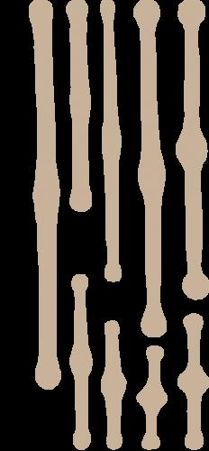 siluetas Tabellaria